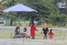 Wisata sawah Desa Tanjungrejo Jekulo Kudus (Foto Sup)
